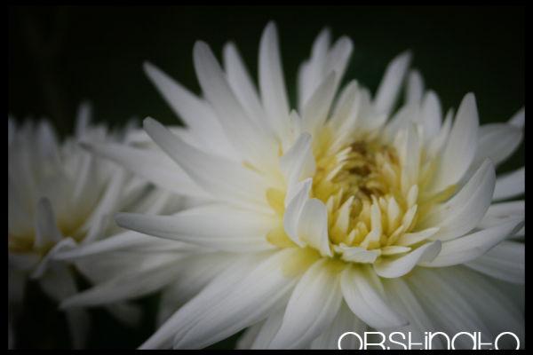 fleuriste demandé !