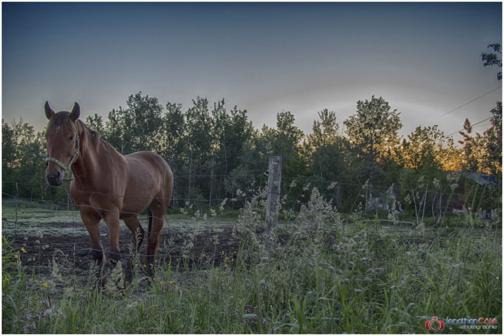 HDR Horse