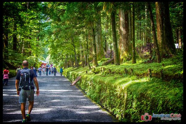 Old cedar road to Nikko Shrine