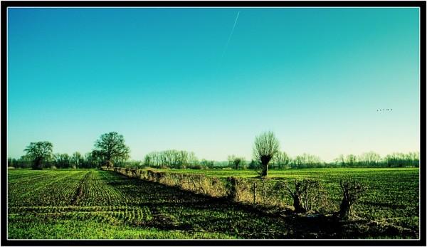 Landscape Maasheggen