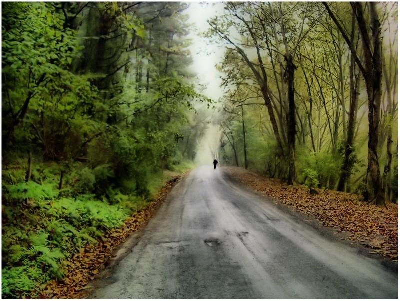 Sólo en el camino