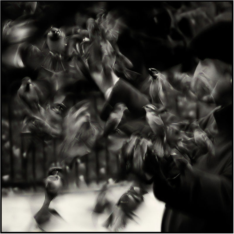 L'homme et les oiseaux