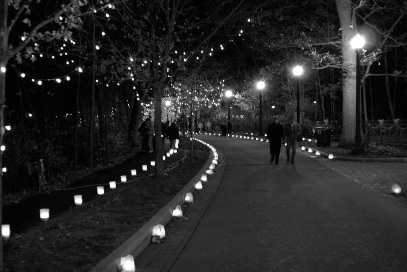 Enchanted Luminaria
