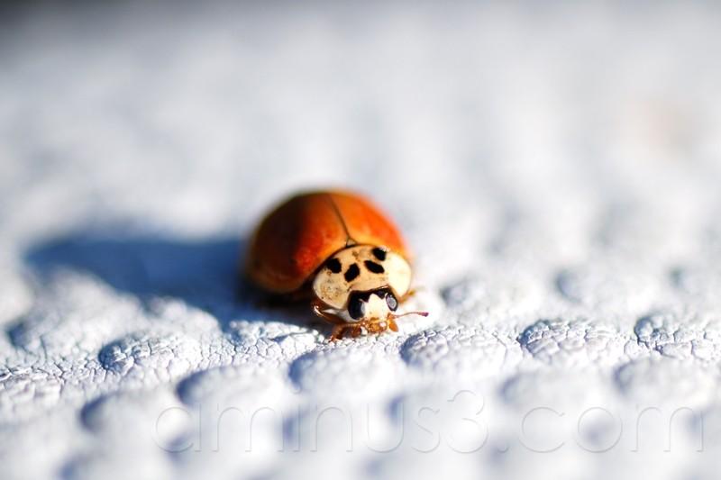 the ladybug and the basketball