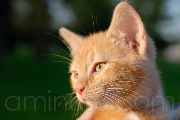 new cat #1