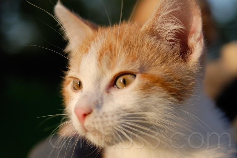 new cat #2