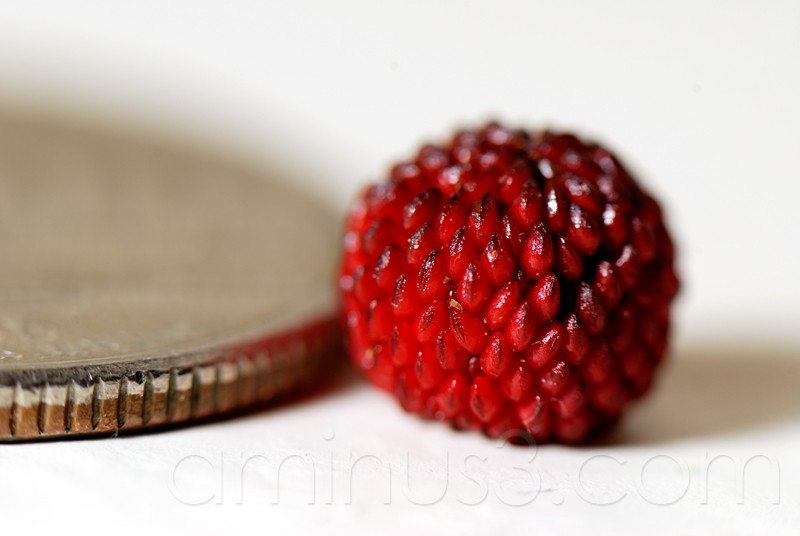 berry, quarter