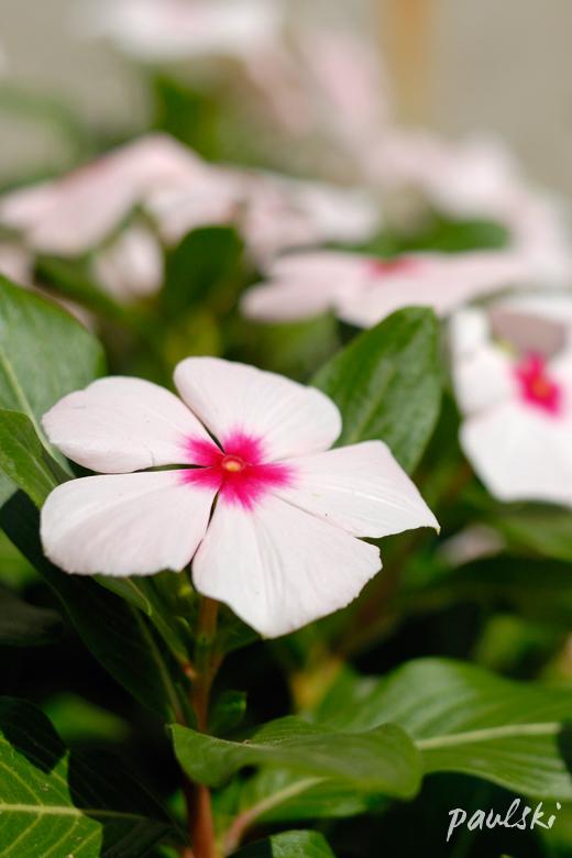[untitled mediocre flower shot]