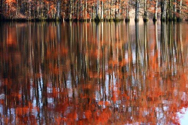 Swamp Cypress mirror