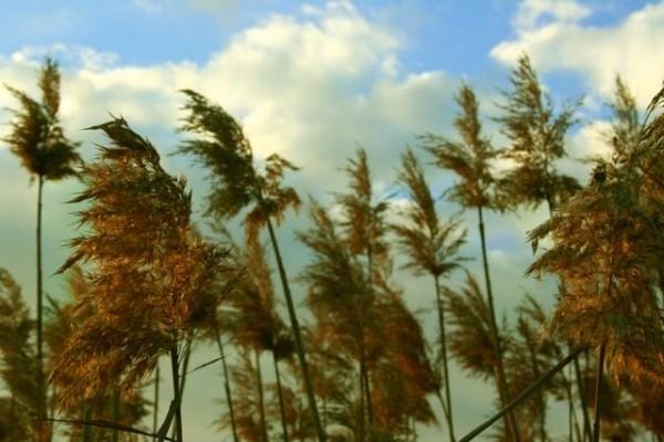 El viento