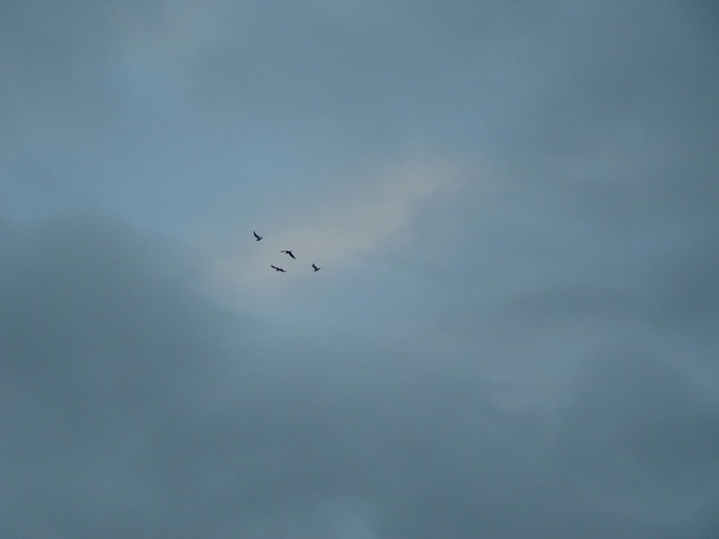 00033::Birdom