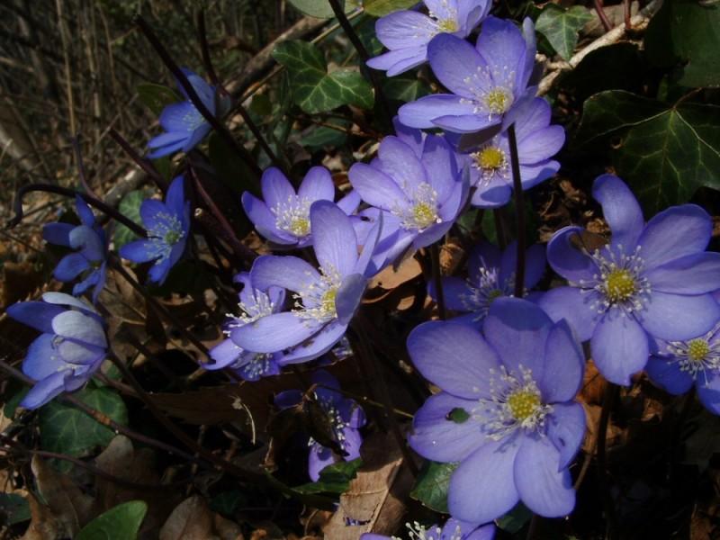 00076::Flowers