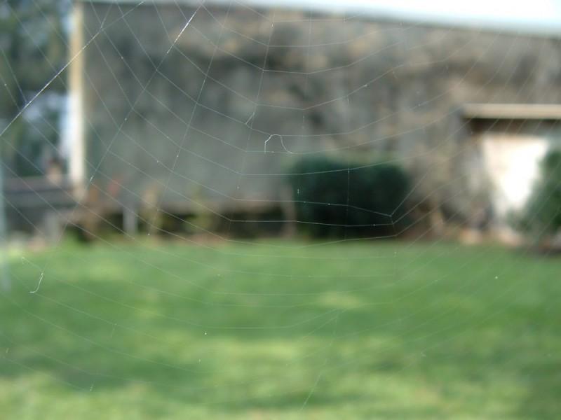 00084::Spider again