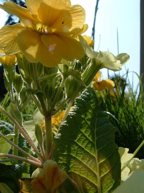 00085::Salad or flowers?