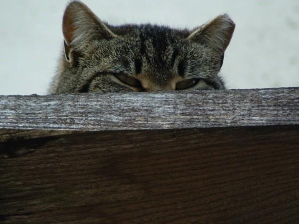 00090::Cat
