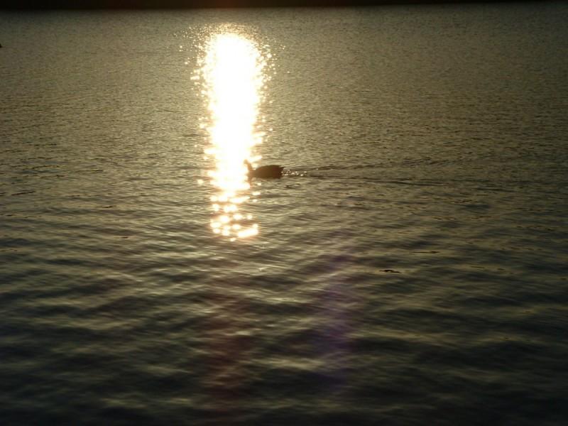 00104::Duck