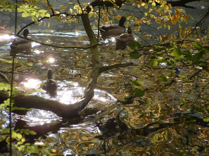 00167::Ducks