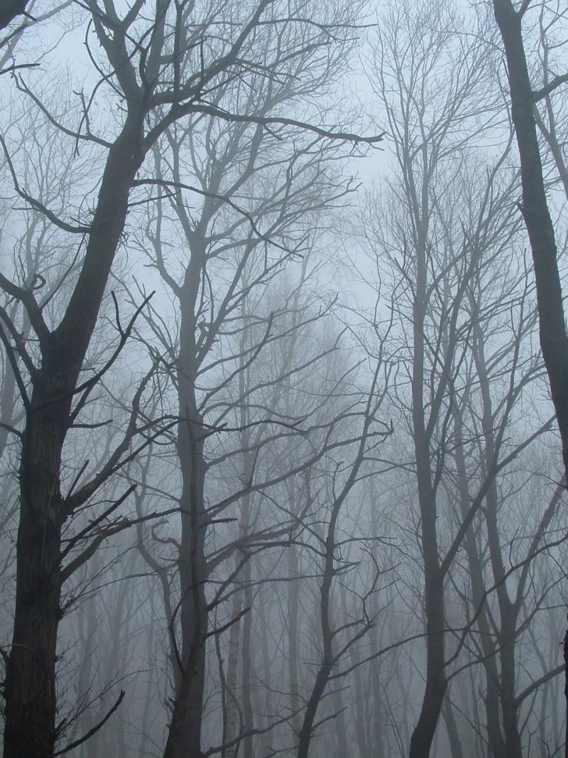 00294::Foggy wood B-side