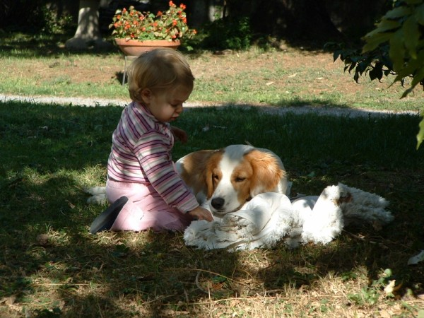00371::Puppies
