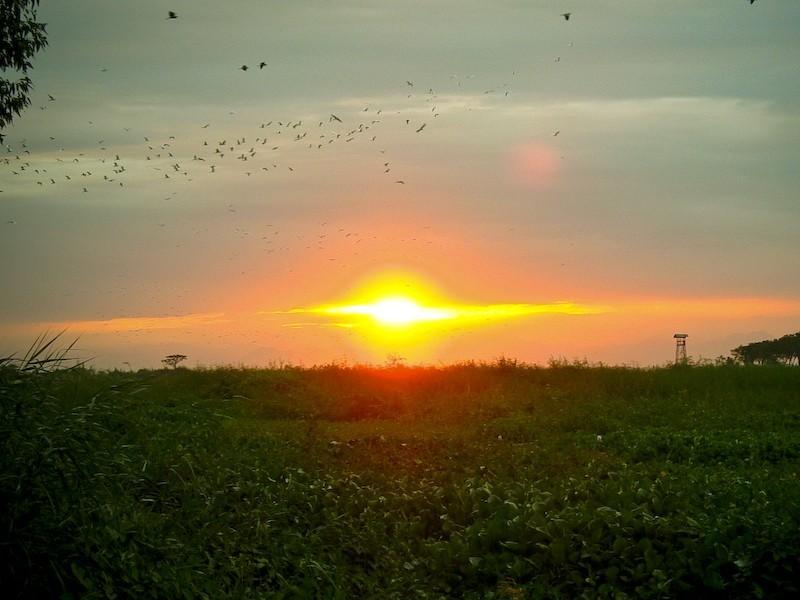 Candaba Sunset