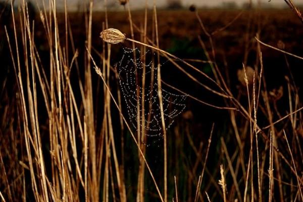 Web Spider