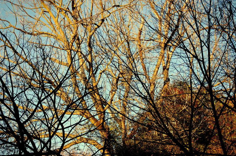 Winter Afternoon Light