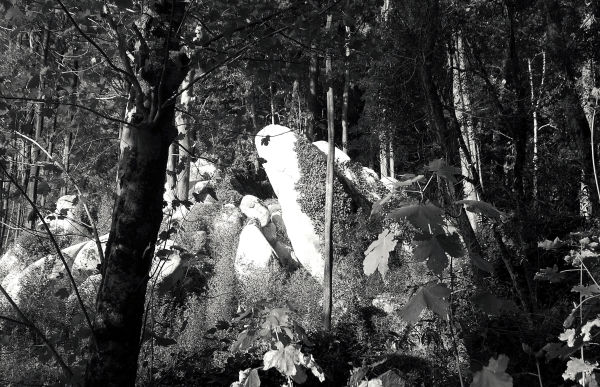 Clear evidence that there are ghosts in the woods