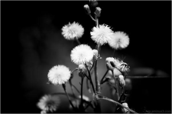 The Garden Weed