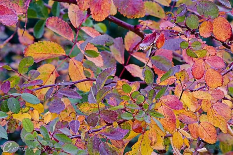 Fall Colors at Rancho Santa Ana Botanical Gardens