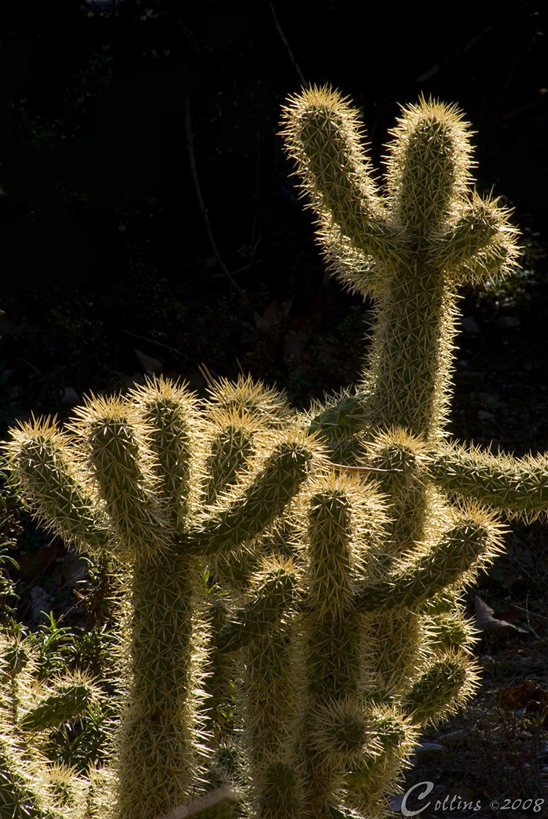 Rancho Santa Anna Botanical Gardens