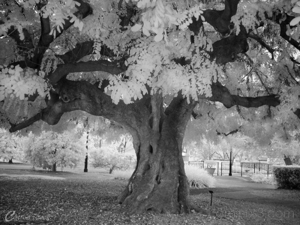 Claremont College Infrared Photo
