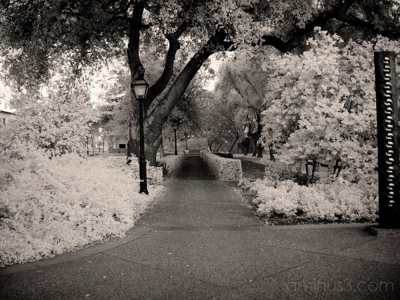 Infrared Photo at Claremont College