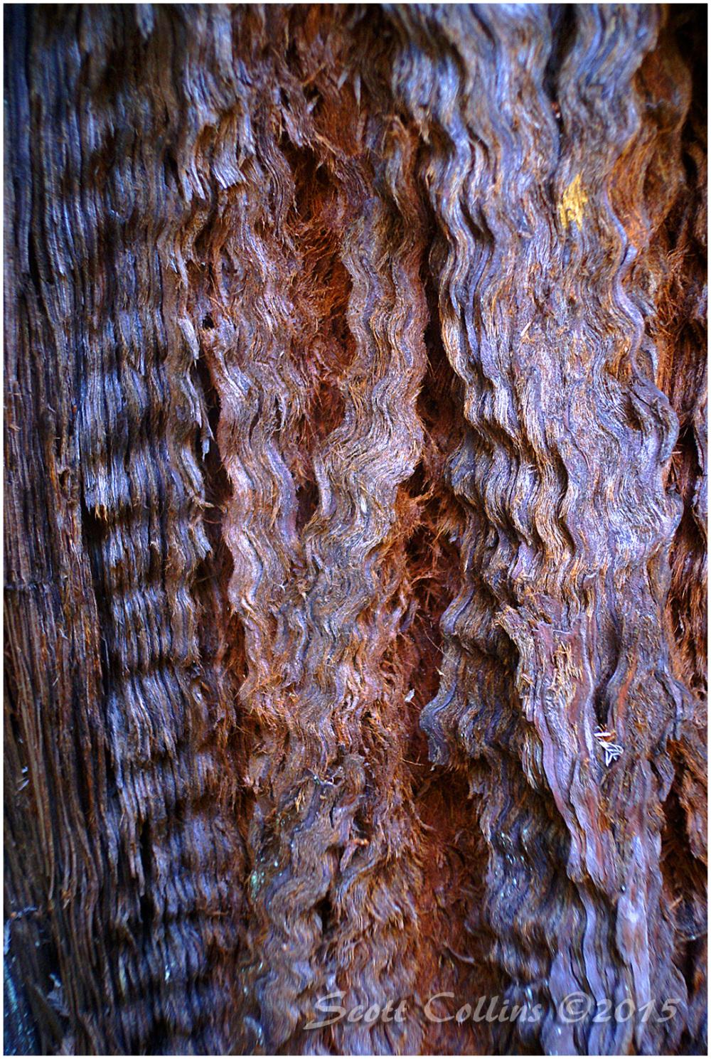 Tree Bark 01