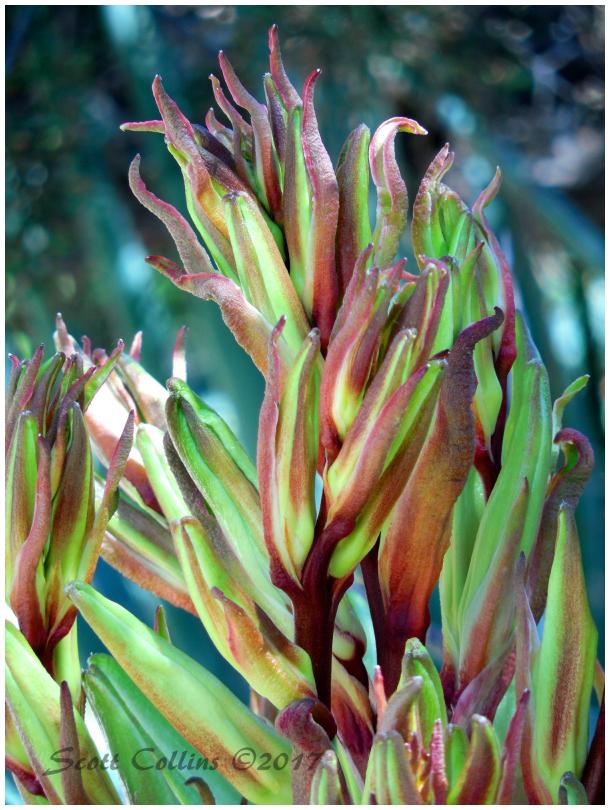 Rancho Santa Ana Botanical Gardens 02