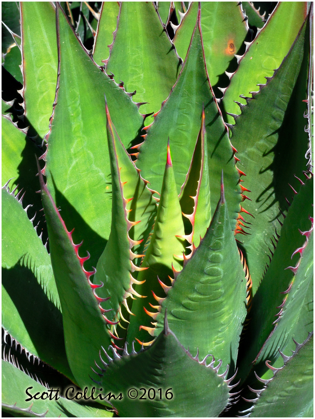 Rancho Santa Ana Botanical Gardens 04