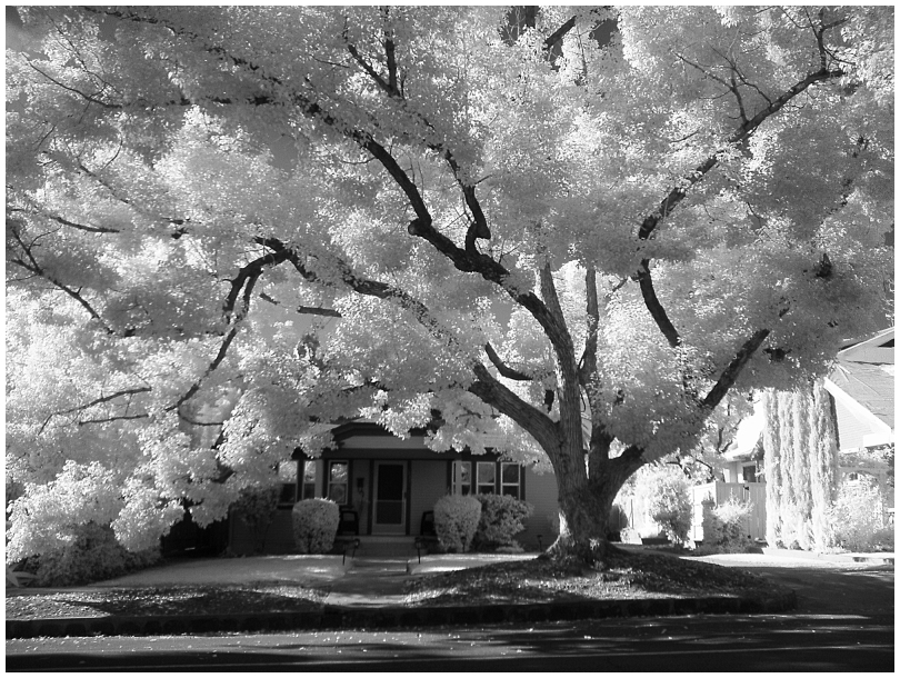 Infrared Photo of Homes