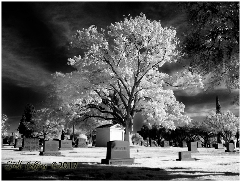 Bellview in Infrared 3