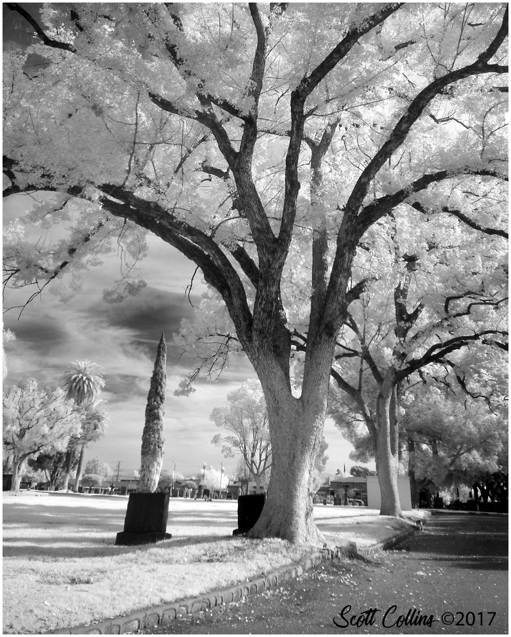 Bellview in Infrared 8