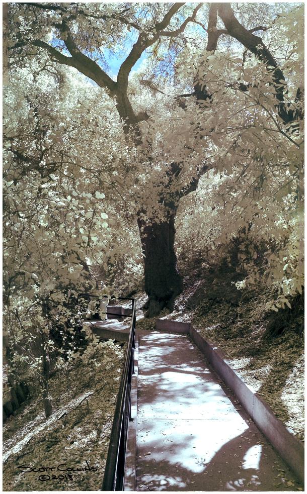 Color Infrared of Rancho Santa Anna Botanical