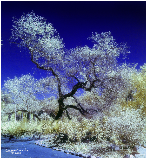 Color Infrared of Rancho Santa Anna Botanical