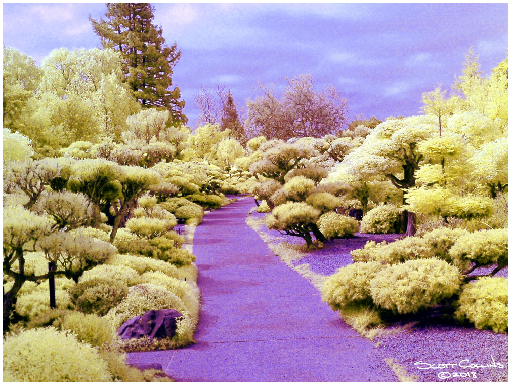Infrared Japanese Gardens Hayward Ca.