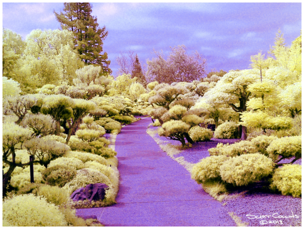 Infrared Japanese Friendship Gardens 03