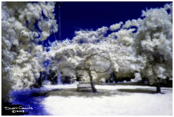 Infrared LA Arboretum