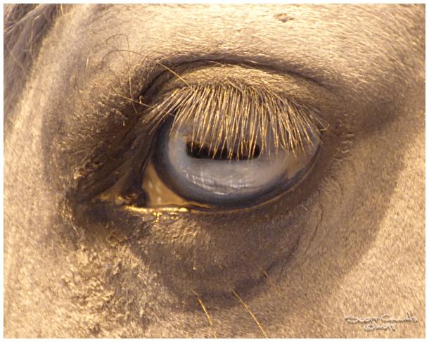 Infrared Eye