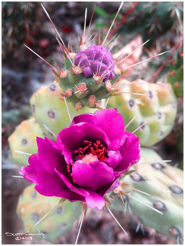 Rancho Santa Ana Arboretum