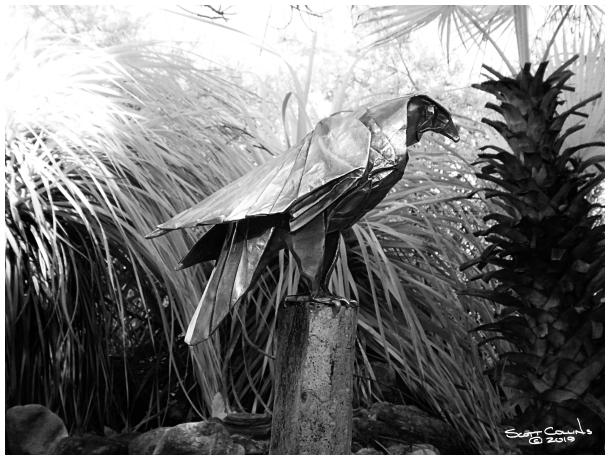Infrared Rancho Santa Ana Botanical Gardens