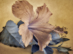 Infrared Hibiscus