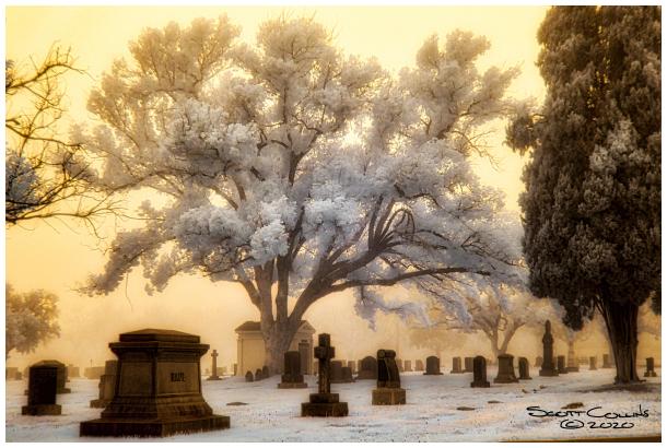 Infrared Bellevue Cemetery