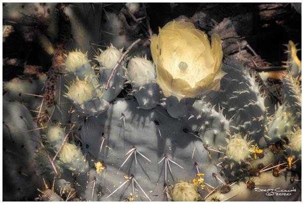 Infrared Cactus