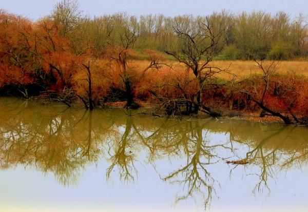 The river mirror